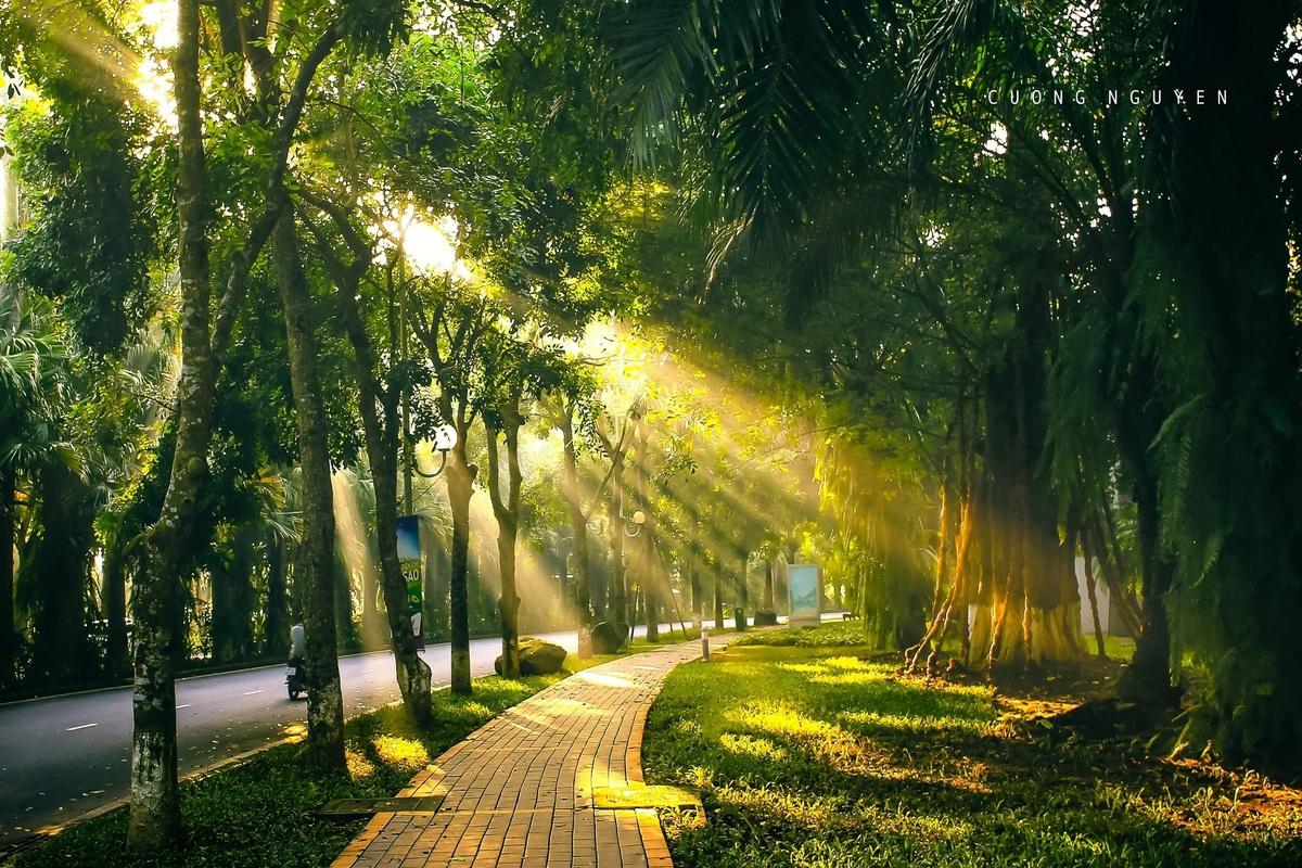 những con đường rợp bóng cây tại ecopark